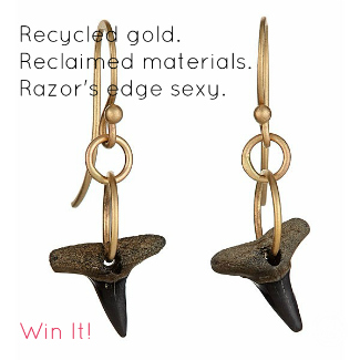 Recycled gold and shark tooth earrings.