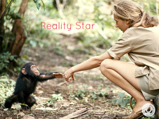 jane goodall reaches her hand out to touch the hand of a baby chimpanzee in the forest