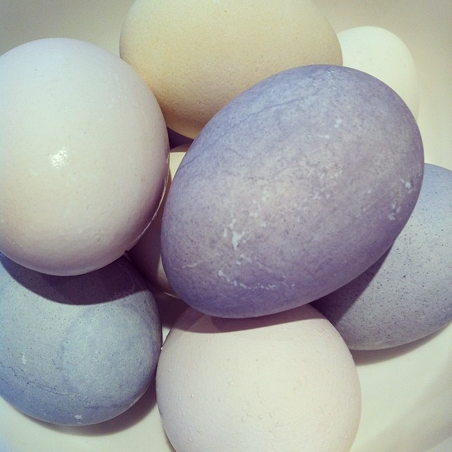 Step six: eggs! #diy #easter eggs #eastereggs #diyeaster