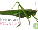 mommy greenest natural lifestyle trend cricket paleo diet