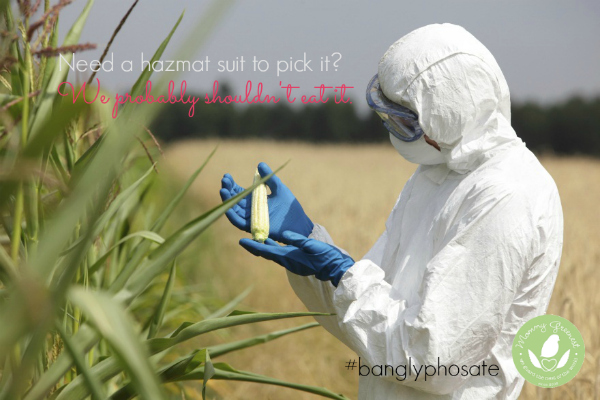 Scientist in hazmat suit inspects glyphosate corn