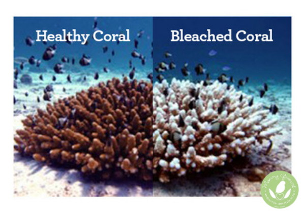 coral reefs before and after the effects of toxic chemical sunscreens