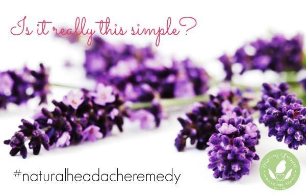sprigs of lavender on white background
