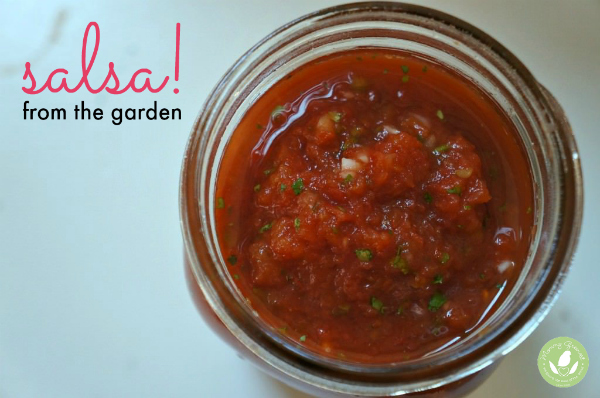 diy homemade salsa recipe